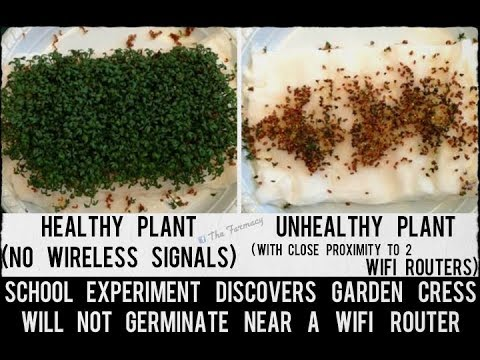 5G WiFi Router Experiment On Plant Growth